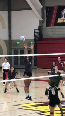 Volleyball at top of division, 8-1