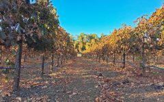 Knightsen vineyard aims to expand