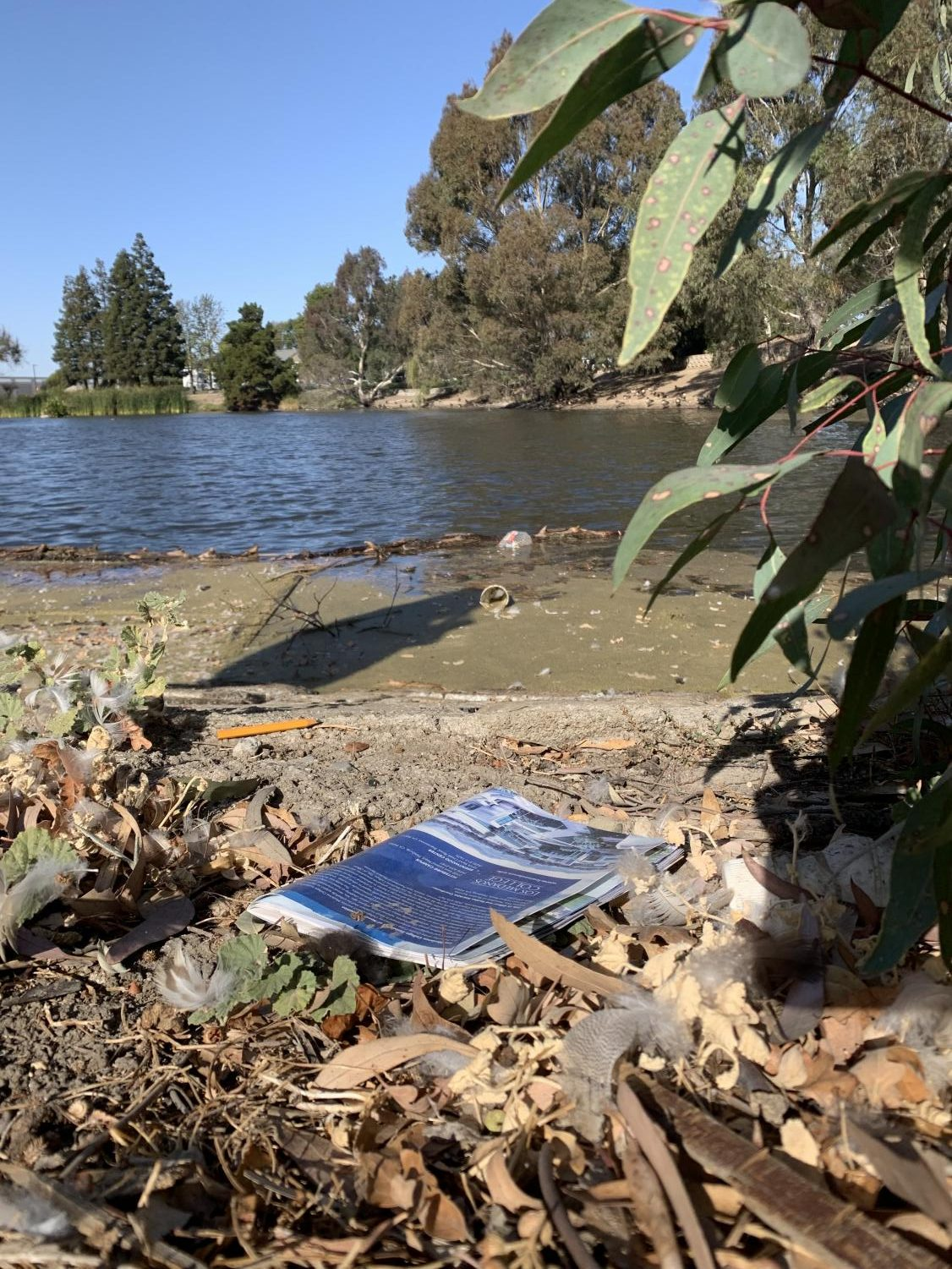 A photo of the Los Medanos College lake, taken Tuesday, Nov. 19, shows that the lake needs cleaning.
