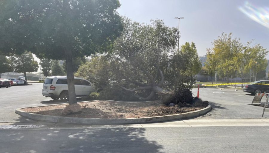 The incident was spotted in Parking Lot A on the LMC Pittsburg campus, with the tree damaging two cars.